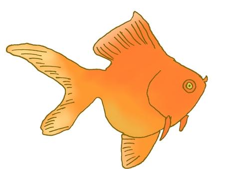 Orange Ryukyu