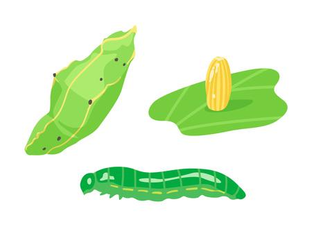 Animal _ Bug _ No white butterfly larva _ no line