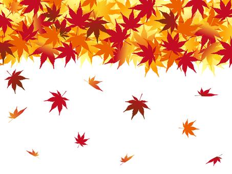 Japanese style material Scenery of autumn Momiji