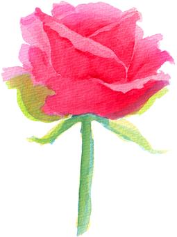 빨간 장미 (수채화 일러스트)