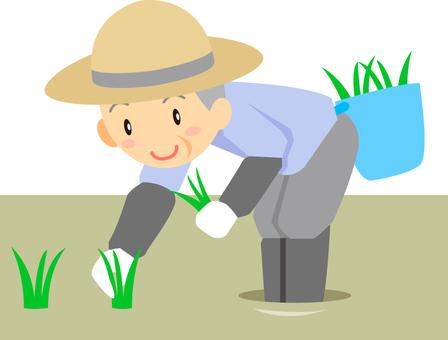Spring / rice planting