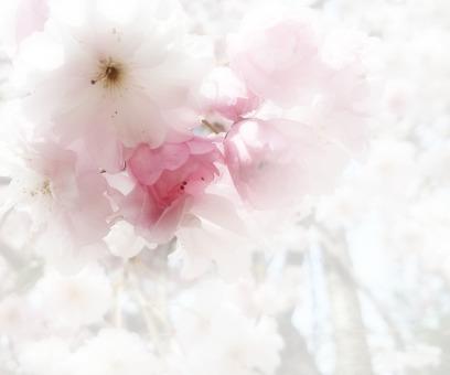 Flower message card 8-A