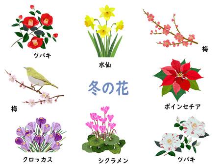 冬の花セット