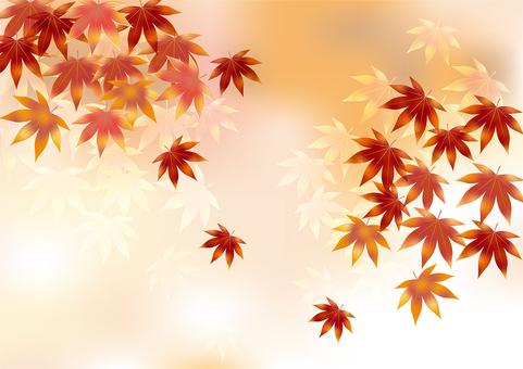Autumn leaves 322
