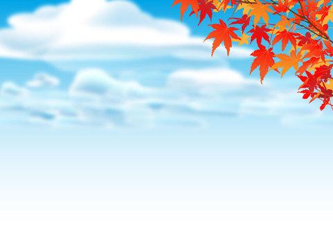 秋天的落葉和秋天的天空