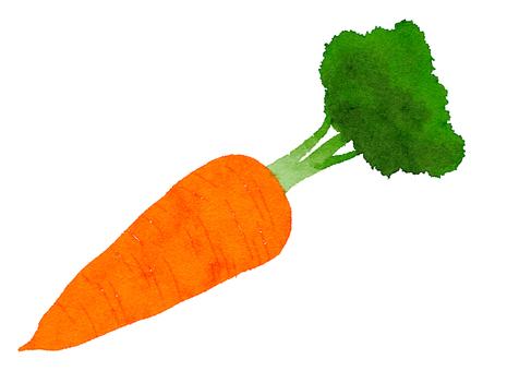 Watercolor ingredients series carrot