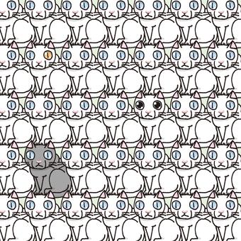 Tatami pattern of cat 038