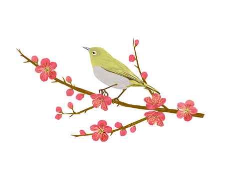 Red plum and white-eye