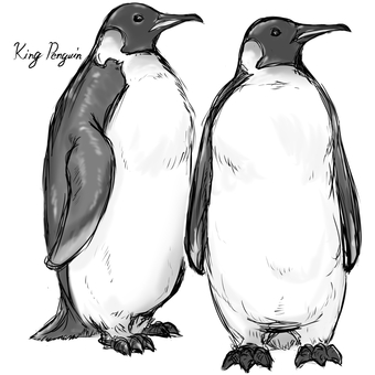 King Penguin A