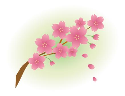 Sakura-015