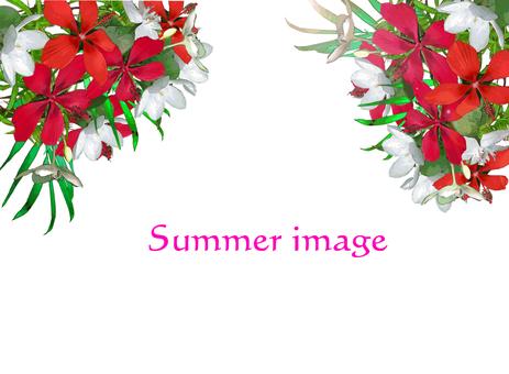 Summer color flower image