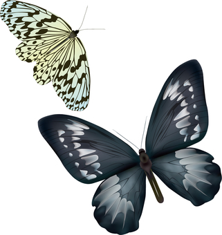 Two black and white butterflies
