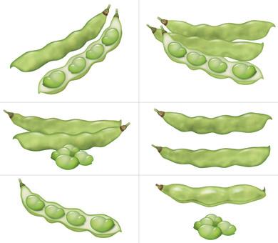 Fava beans (light color) / legumes