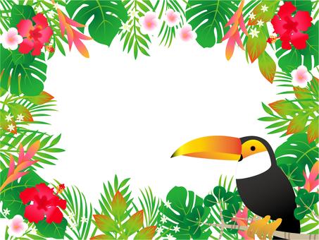 巨嘴鸟和丛林