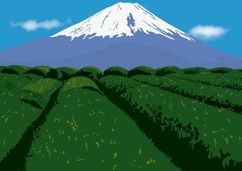 Mount Fuji and tea plantation