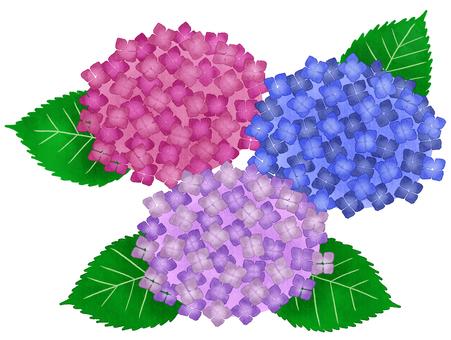 Various hydrangeas