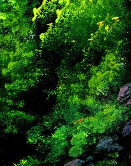 新鮮的綠色森林