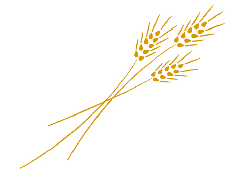 Wheat illustration 2