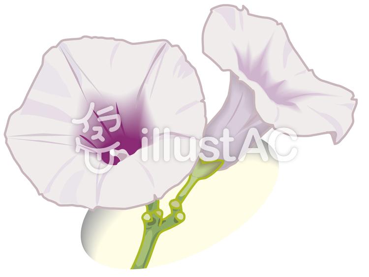 サツマイモの花イラスト No 1047357無料イラストならイラストac