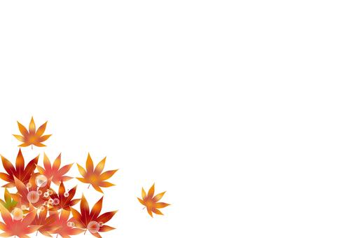 Autumn leaves 295