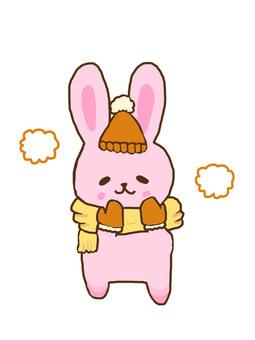 Rabbit warm