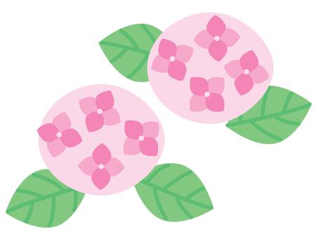 수국 02 핑크