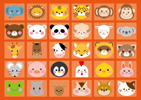 Various Animals
