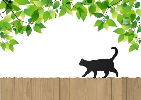 新鲜的绿色和黑猫和树围栏(背景渗透)