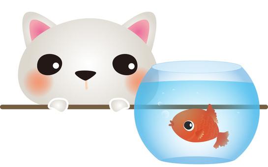 White cat with goldfish