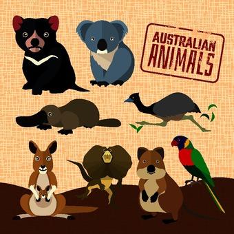 Animal in Australia