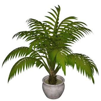 관엽 식물 04