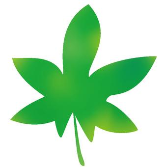 Maple maple green 01
