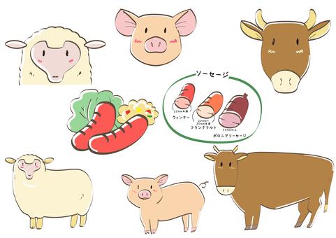 양, 돼지, 소, 소시지