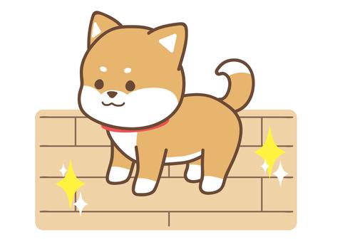 柴犬_床掃除