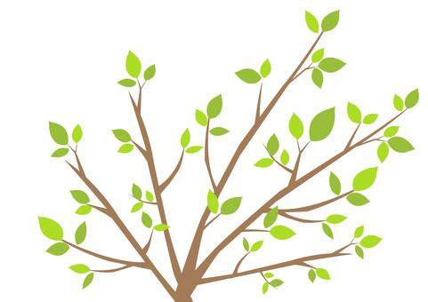 Tree branch 2