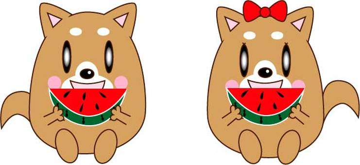 Dog couple eating watermelon
