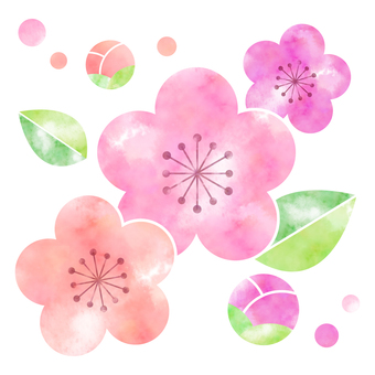 Plum Blossom Illustration 2