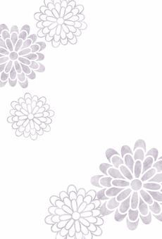 菊薄紫 / 상중