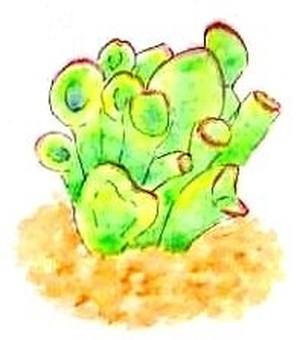 Succulent plants iii