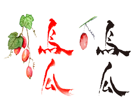 烏瓜イラスト入り筆文字