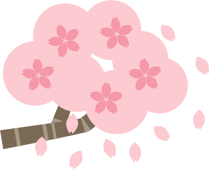 Cherry blossoms start to scatter