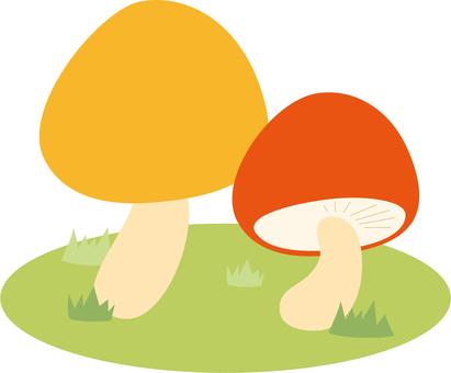 Plant mushrooms 4