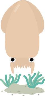 바다 생물 오징어
