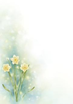 Narcissus watercolor illustration