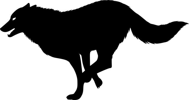 Wolves run