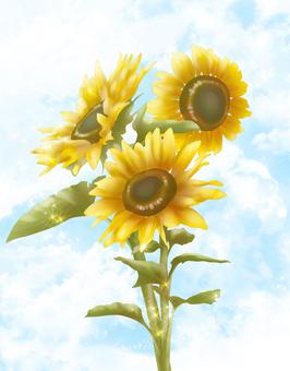 Flowers, sunflowers and sky