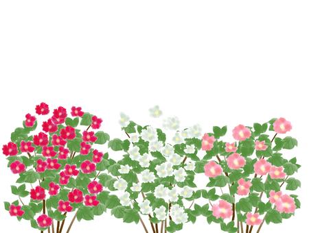 Hibiscus (フ ヨ ウ) 4