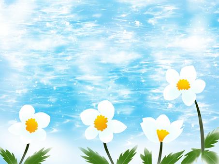 White flowers bloom 2