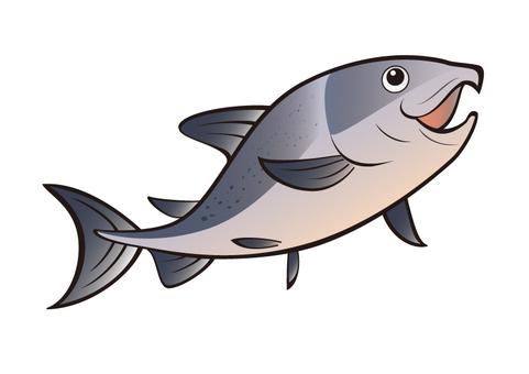 Fish _ Salmon