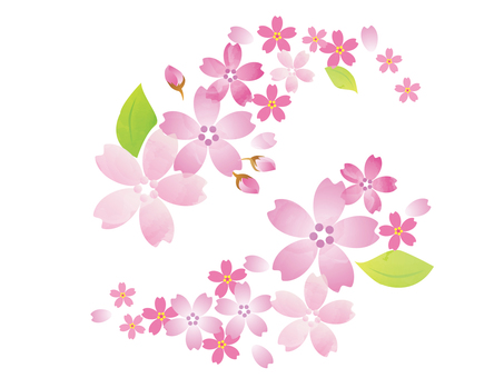 Sakura illustration 2